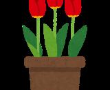ぷらざ★ふぁーむ通信「チューリップが開花しました🌷」