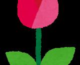ぷらざ★ふぁーむ通信「白チューリップが開花しました🌷」