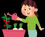ぷらざ★ふぁーむ通信 ~ズッキーニの花が咲きました!~